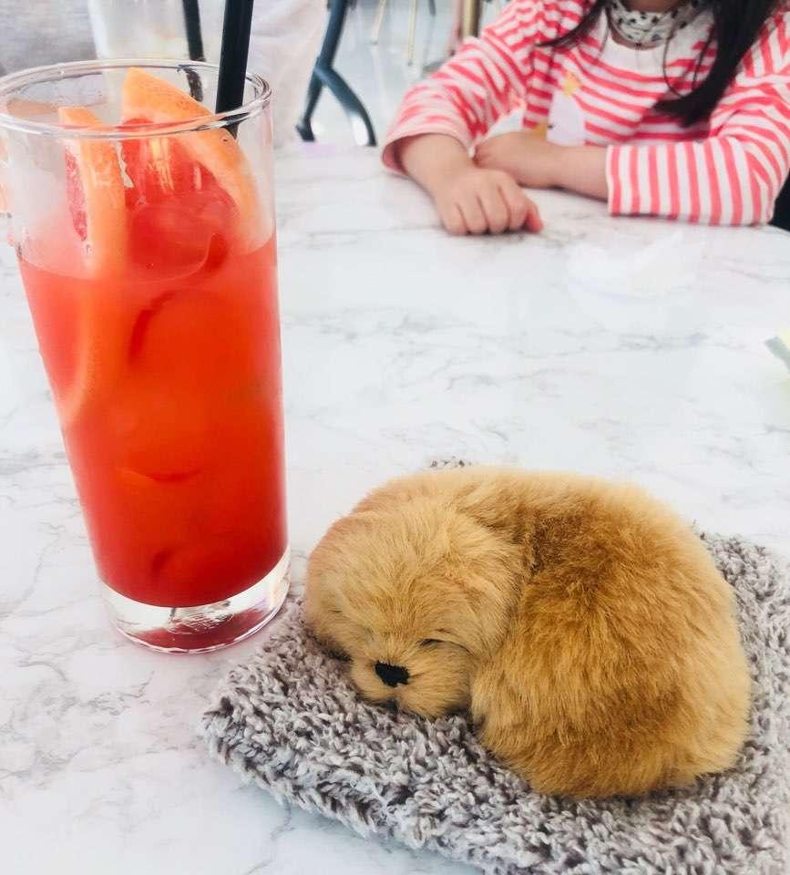 자몽에이드 와 강아지.jpg